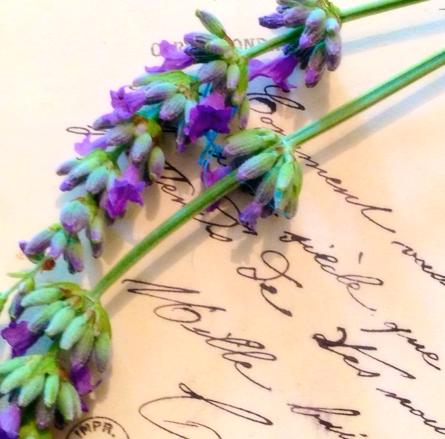 Lavender French la VIe Corey Amaro