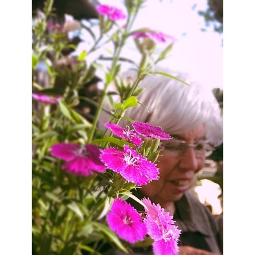 the lovely flower