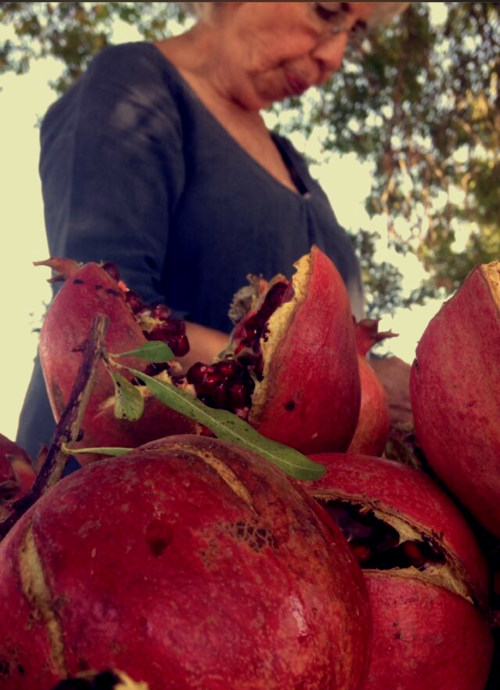 her famous pomegranate tree