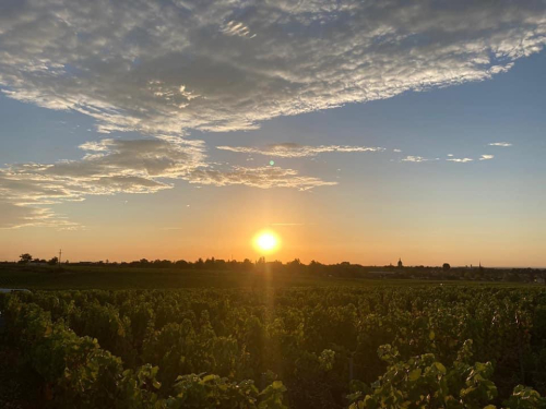 SUNRISE ON LUCIEN JACOB VINEYARDS