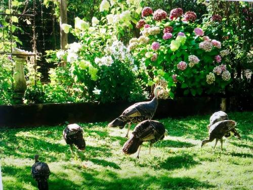 Becky's garden with friends