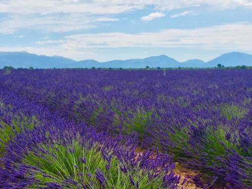 Lavender laurie Annya
