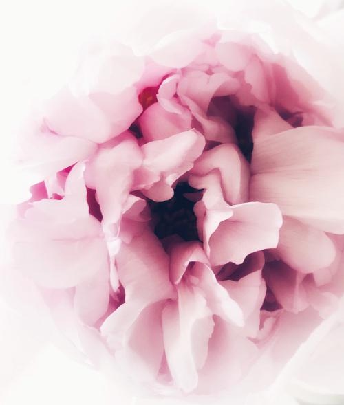 corey amaro flower