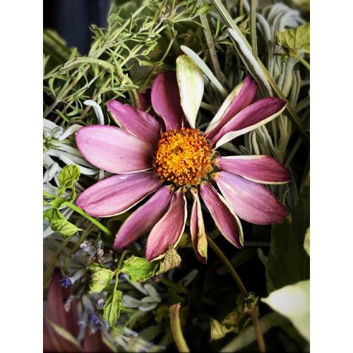 French la Vie Flowers