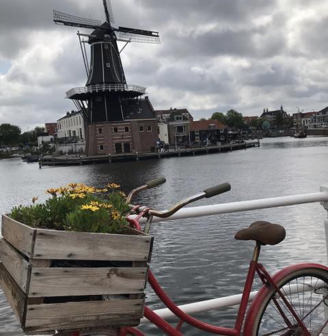 sarah Webb  Amsterdam