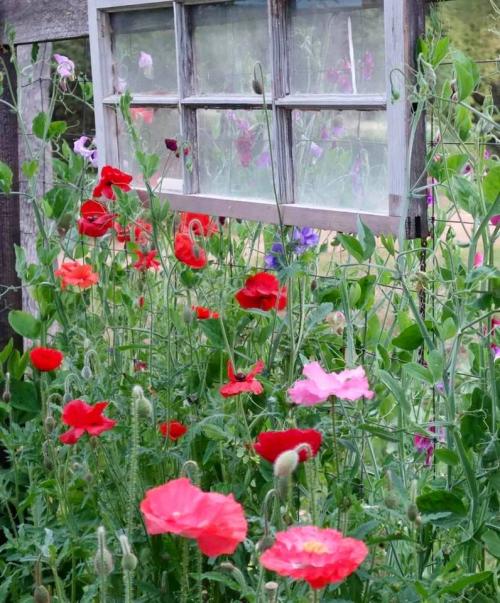 Becky's garden