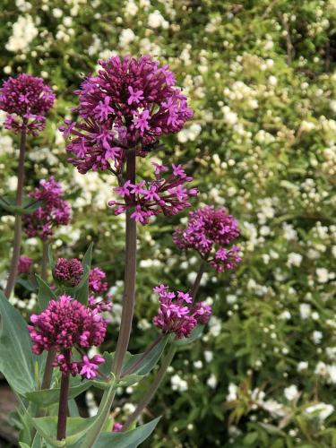 flowers corey amaro