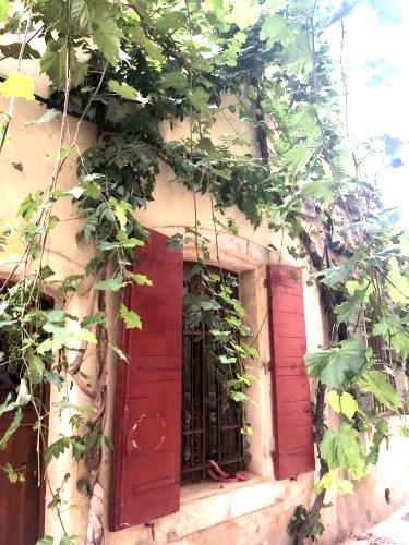 Flowers in French Windows, Corey Amaro, French la Vie