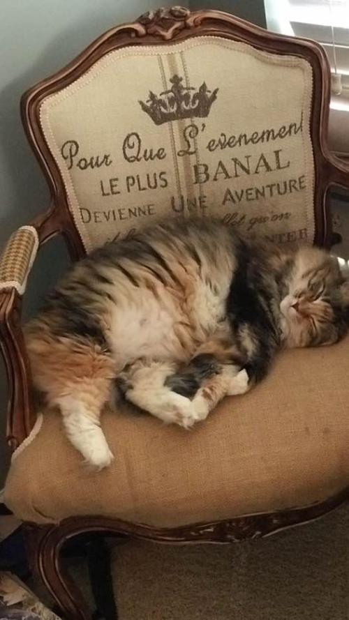 Sarah's cat